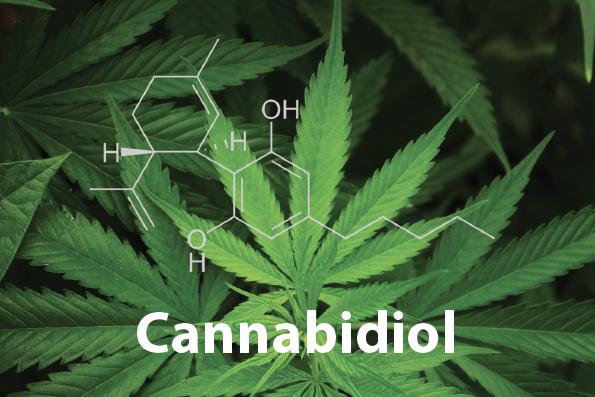 cannabidiol feuille marijuana