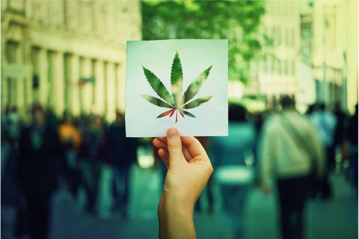 cannabis marijuana société society
